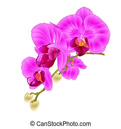 Stem with flowers and  buds beautiful orchid  purple   vector.eps