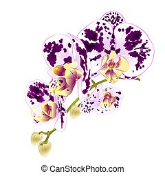 Stem with flowers and  buds beautiful orchid spotted purple and white  vector.eps