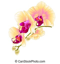 Stem with flowers and  buds beautiful orchid yellow  vector.eps