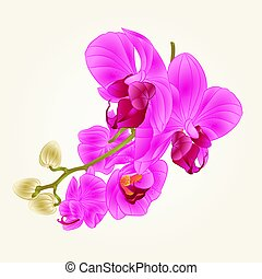 Stem with flowers and  buds l  Orchid purple  vintage  vector.eps