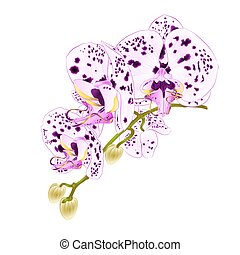 Stem with flowers and  buds orchid with dots purple and white  vector.eps