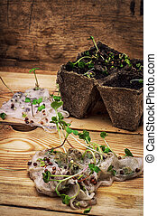 stems sprout plant in marl - germinated spring planting the...
