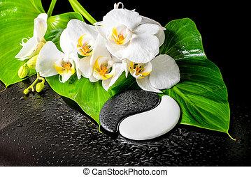 sten, begrepp, blomma, phalaenopsis, yin-yang, grön, struktur, dagg, bakgrund, närbild, kurort, svart, vit, orkidé, blad