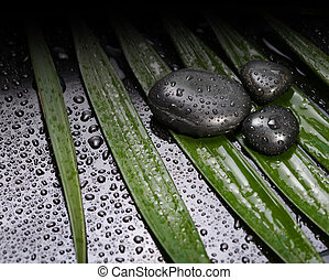 stenen, black , blad, groene, nat