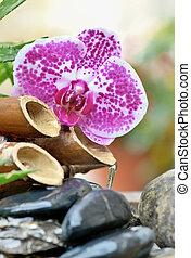 stenen, vloeiend waterhoudend, fontijn, afsluiten, black , bamboe, orchidee