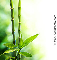 stengels, twee, bamboe, lichtbundel