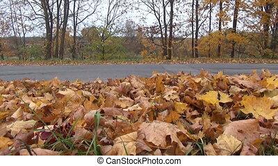 step foot leaves path - people step through the abundant...