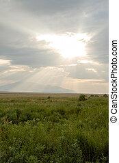 steppe after a rain