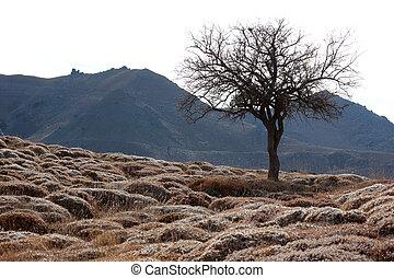 steppe, clima, espinhoso, terra
