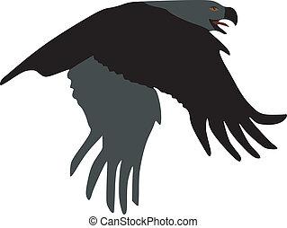 Steppe Eagle on white background