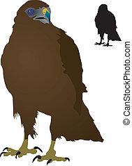 Steppe Eagle - vectors Steppe Eagle