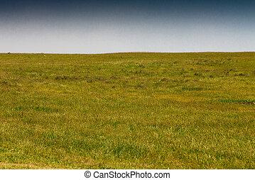 steppe, em, primavera