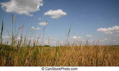 Steppe grass In central part of Russia - Steppe grass In the...