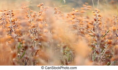 Steppe grass shivering in wind fine tremor. Trembling like...