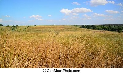 Steppe landscape In central part of Russia - Steppe...