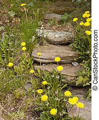 Stepping stone stair overgrown with weeds and dandelions.