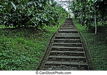 Stairs way at coffee plantation in Java - Indonesia