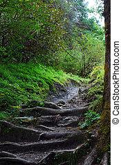 steps on trekking way of himalayas rang,nepal