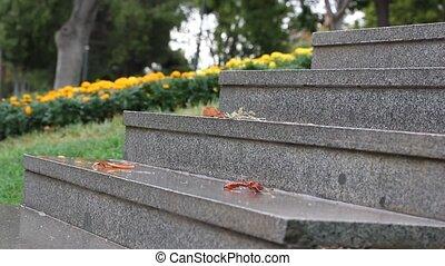 steps., pluie, granit, jaune, flowers.