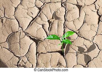 sterile, germoglio, concetto, verde, suolo