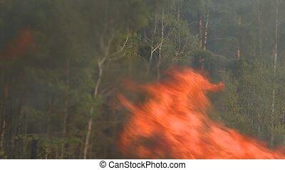 sterk, disaster., natuurlijke , burning, vuur, forest., bos