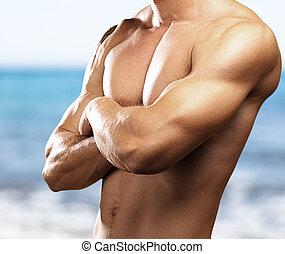 sterke, torso