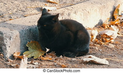 Stern black cat with bright yellow eyes sitting on a street surrounded by fallen autumn leaves