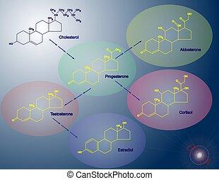 Steroidogenesis - Illustration of the basic steps of making...