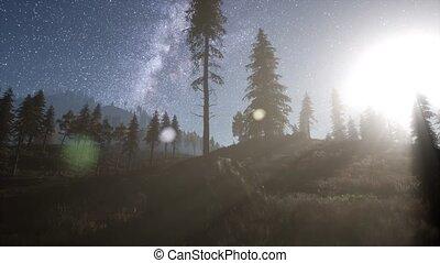 sterretjes, bos, bomen, maanlicht, dennenboom, weg,...