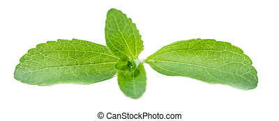 Stevia leaves isolated on white - Portion of Stevia leaves...