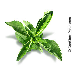 Stevia plant sweetener leaves isolated on white background