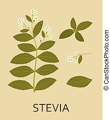 Stevia plant with leaves and pods