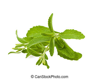 Rebaudiana pianta stevia stevia pianta suolo for Stevia pianta