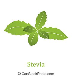 Stevia rebaudiana (vector illustration) - Stevia rebaudiana,...