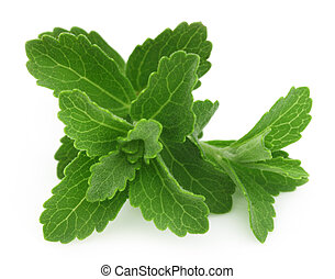 Stevia- a substitute of sugar isolated over white background