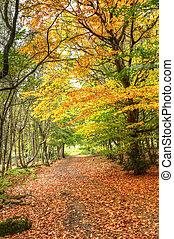 sti, igennem, efterår, fald, farverig, fforest, landskab