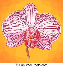 stich, abbildung, phalaenopsis