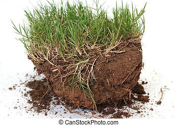 stik, i, græs, og, snavs, er