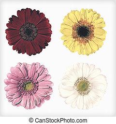 stil, Årgång, isolerat, fyra,  retro, frisk, Blomstrar,  Gerbera