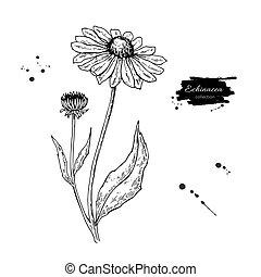 stil, blomma, illustration., drawing., medicinsk, isolerat, leaves., calendula, vektor, herbal, inrista