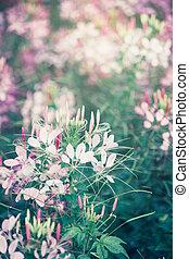 stil, blumengarten, weinlese, morgen, sonnenlicht, wild
