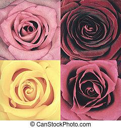 stil, makro, Årgång, fyra,  retro,  rosÈ, Blomstrar
