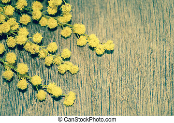 stil, Trä,  mimosa,  retro, bakgrund, Blomstrar