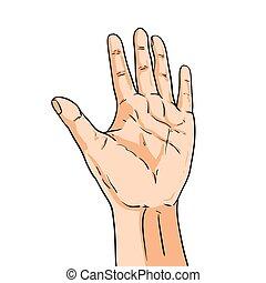 stile, esposizione, mano., isolato, illustrazione, dita, vettore, bianco, five., comico