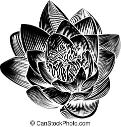 stile, fiore, loto, vendemmia, ninfea
