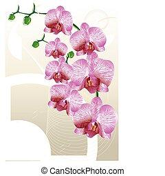 stilisiert, karte, orchidee