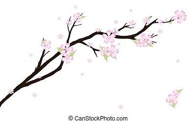 stilizzato, ciliegia, blossom., fondo