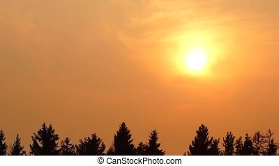 Still hot sunset scape - Golden sunset over spruce forest in...