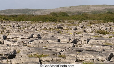 Still landscape shot of very rocky ground with a bushes and...