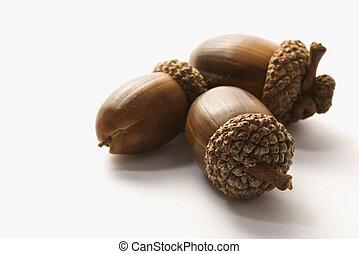 Still life of acorns. - Still life of three acorns.